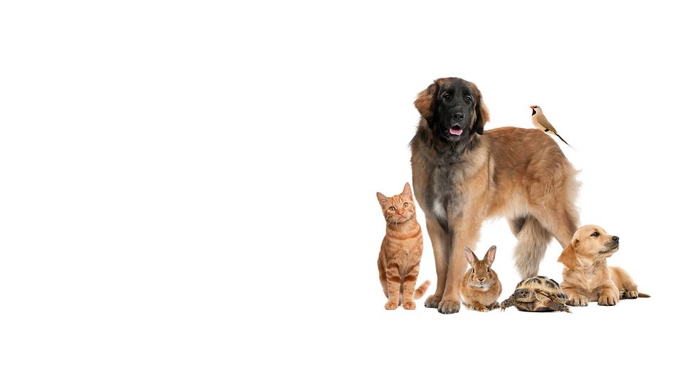 Vets y Pets (14).png