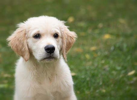 Another Special Outdoor Puppy Training - Course starting 6th September