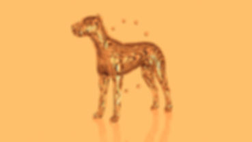 Sliced-Dog.jpg