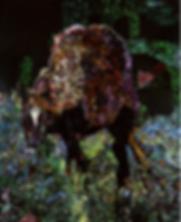 馬(縮小600pix).png