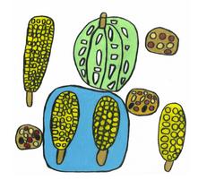 野菜と豆  272×272 色鉛筆・紙・パネル