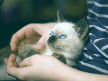 كثير مننا بيربوا قطط فى منازلهم؛و بيكون فى اختلاط كامل بين القطط و أولادنا.