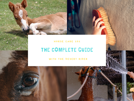 Horse Care 101- the complete guide!