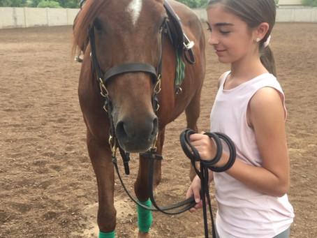 How to bathe a horse