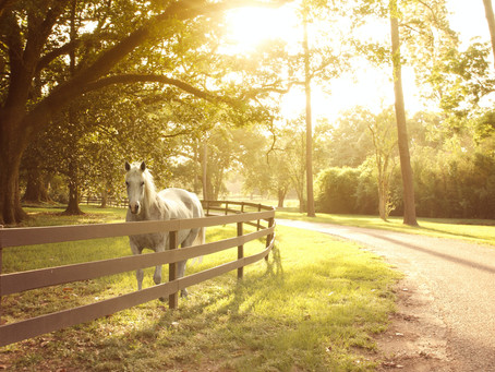 Finding your special someone, your equine