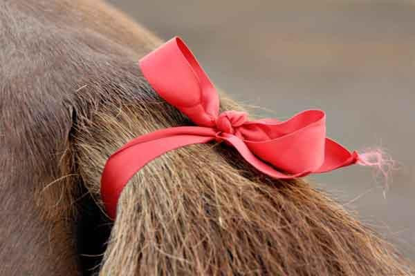 Tail ribbons on horses and what they mean!