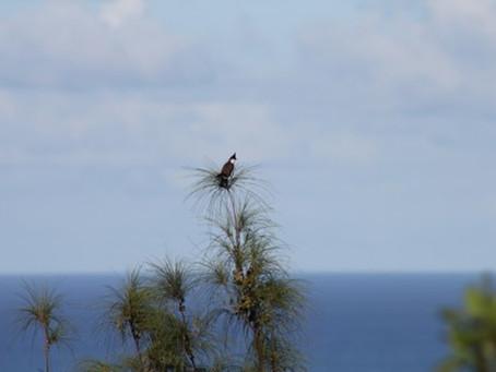 L'oiseau Denho
