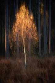 Autumnal triptych I