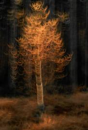 Autumnal triptych III
