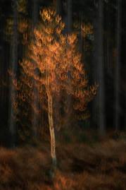 Autumnal triptych II