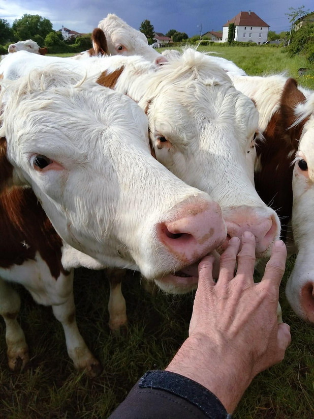 Célébrités végétariennes/végétaliennes/crudivores, quelques exemples: