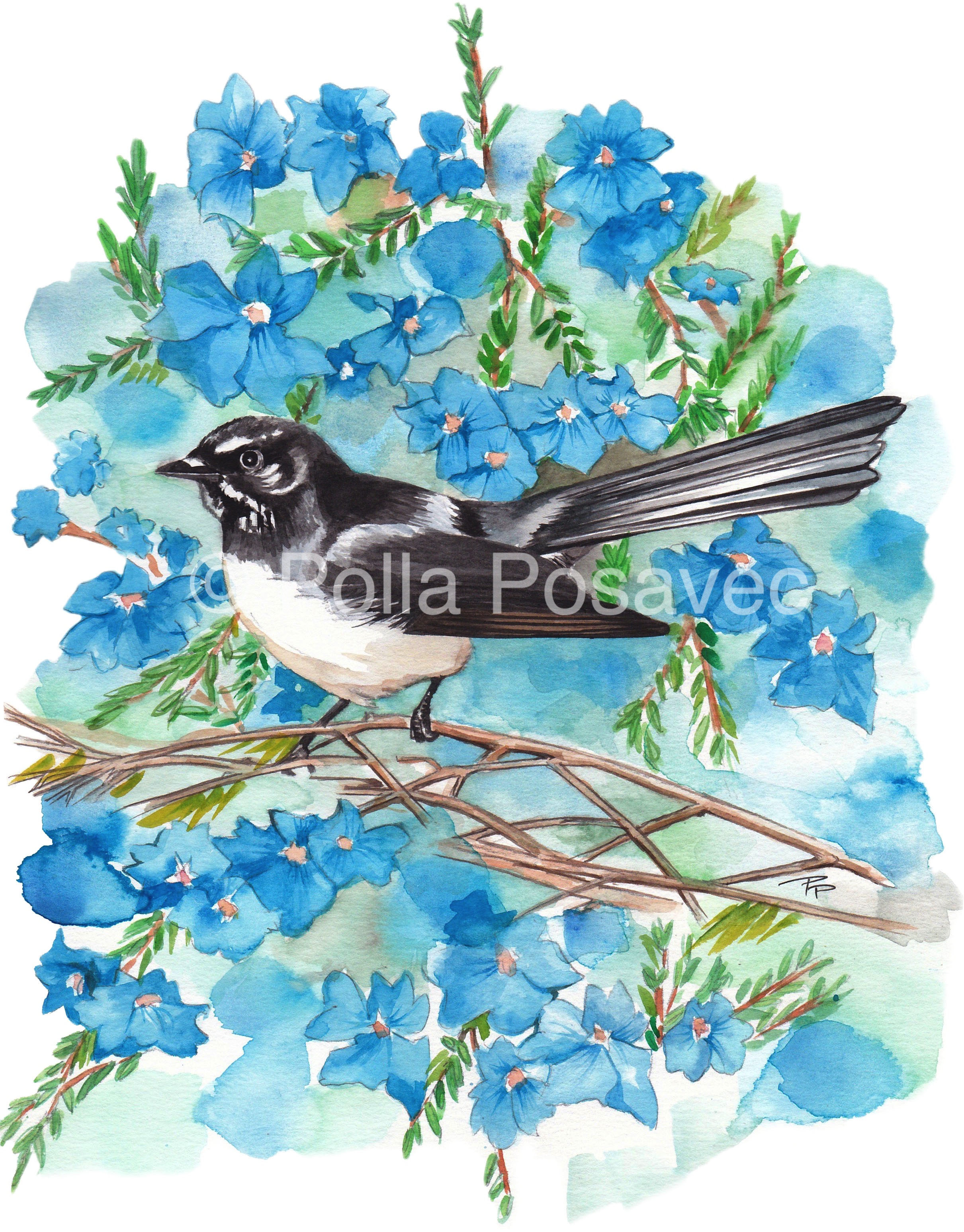 Willie Wagtail & Lechenaultia 1