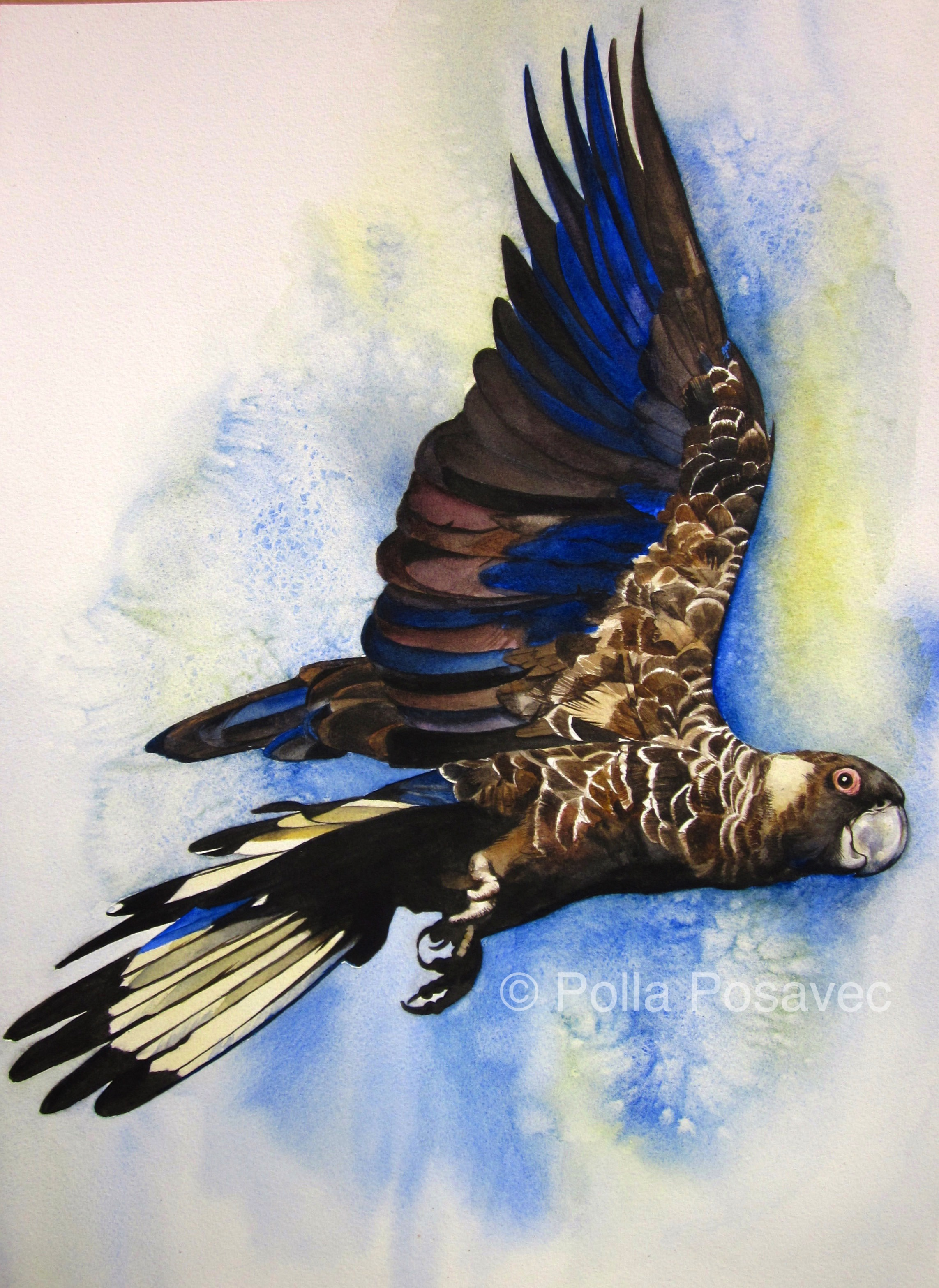 carnaby's cockatoo watercolour