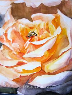 Apricot Rose detail