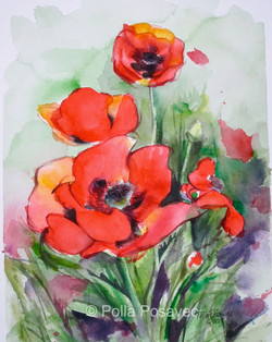Red Poppies (1)