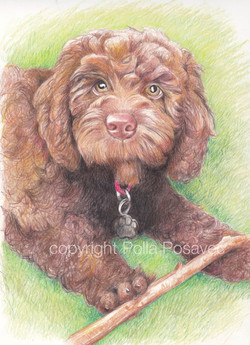 Millie drawing1