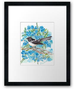 Willie Wagtail & Lechenaultia