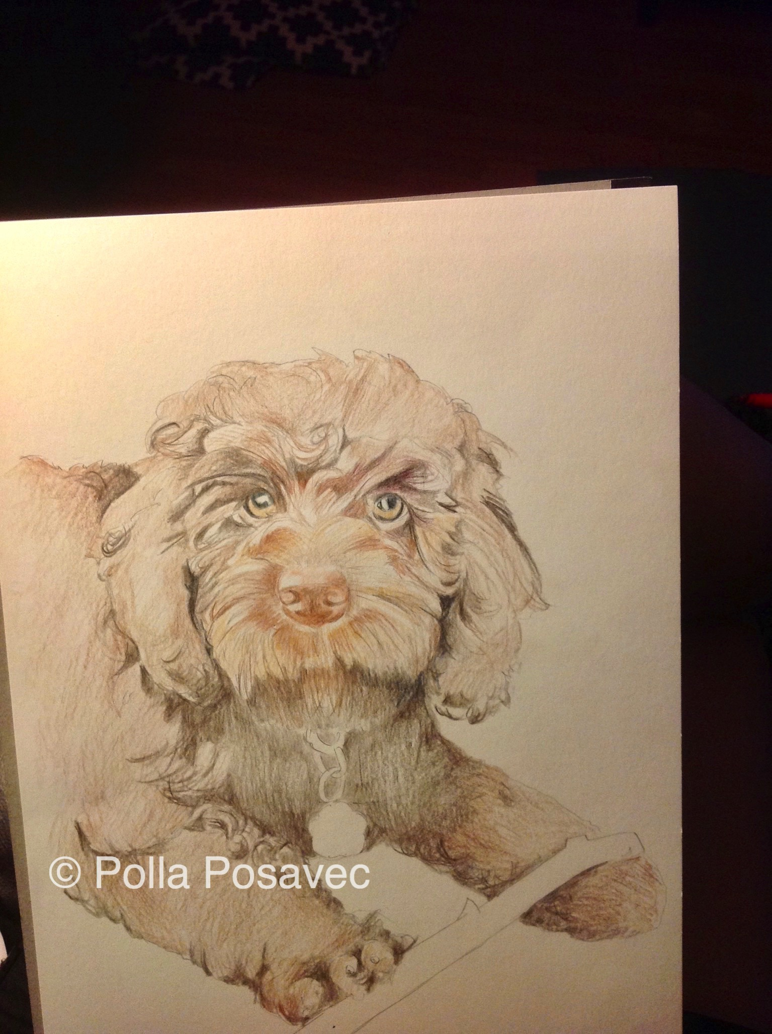 Millie drawing WIP2