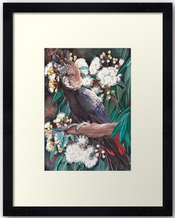 Black Cockatoo & Marri