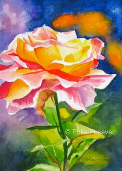 A Single Glowing Rose