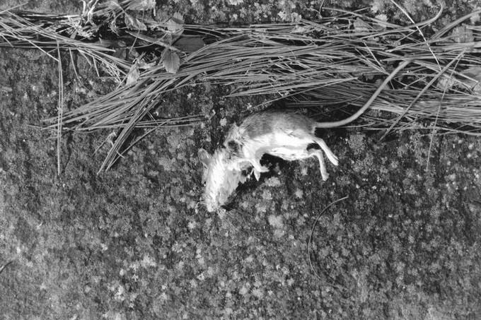 mouse.jpeg