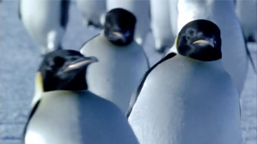 "Honda- ""Penguins"""