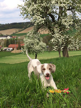 Allergikerhund 02.jpg