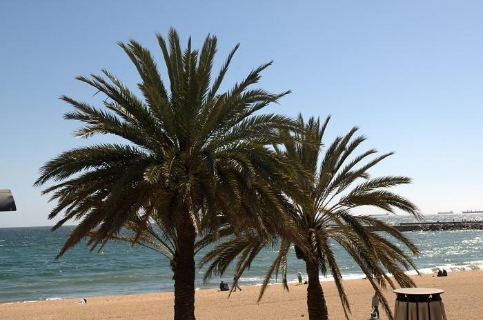 Barceloneta 9.jpg