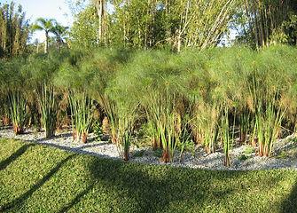 Estação ecológica de tratamento de efluentes, wetlands, zona de raízes,  filtro plantado com macrófitas, fitorremediação e biorremediação