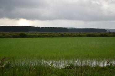 Uso de água de chuva na irrigação, criação animal, agroindustrias e estufas
