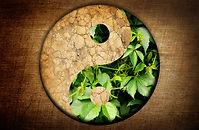 Yin and Yang symbol of harmony between t