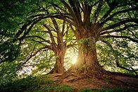 tree-3822149_1280.jpg