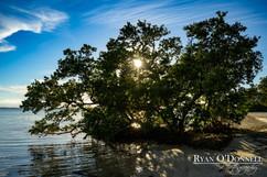 Punta Rassa Florida