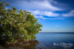 Punta Rassa FL