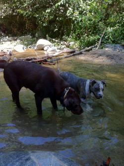 Rocco and Takoda