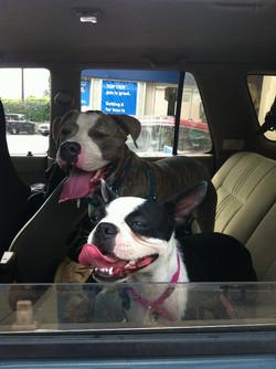 Rocco and Bella