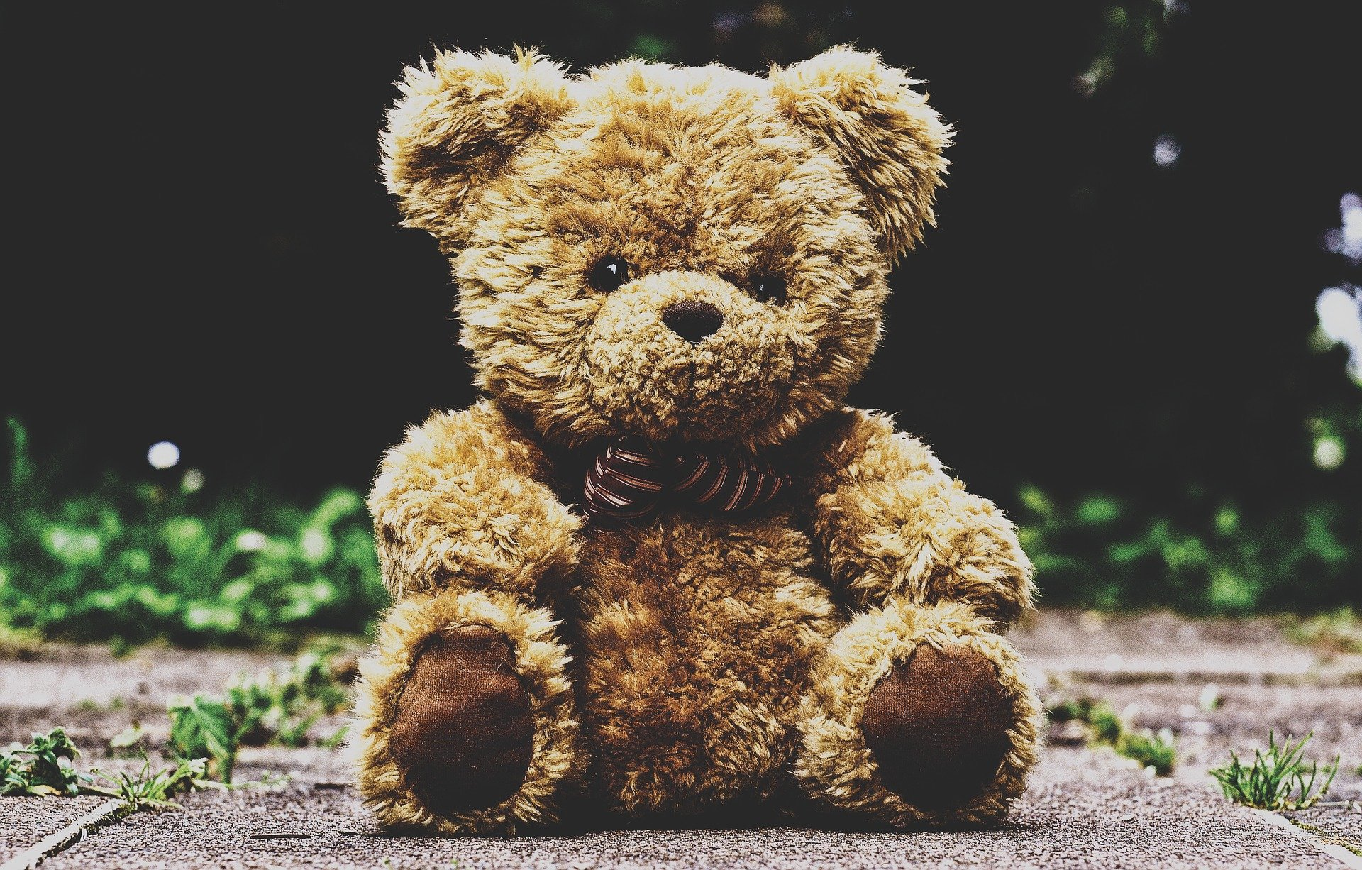 teddy-bear-3599680_1920