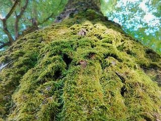 La Inmensa Brevedad del Bosque