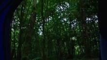 Sola en el Bosque Nocturno