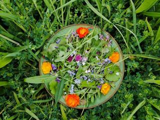 Directrices Generales para Reconocer y Recolectar Plantas Comestibles y/o Medicinales