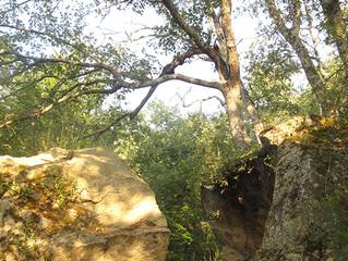 El Árbol que quebró la Roca