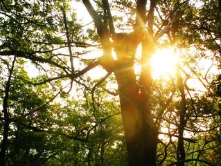 La Colaboración del Bosque
