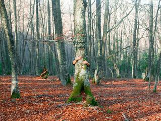 Aprender de o con los árboles