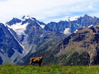 Le Tour de l'Aiguillette du Lauzet (2611m)