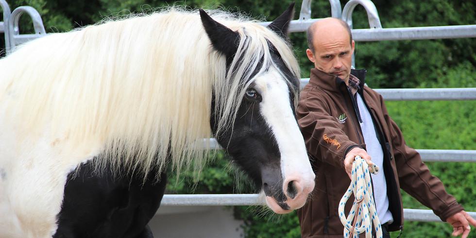 Kurs Persönlichkeitstraining Mensch & Pferd