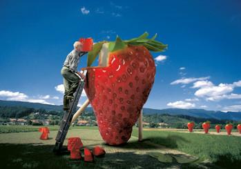 der Erdbeerbauer