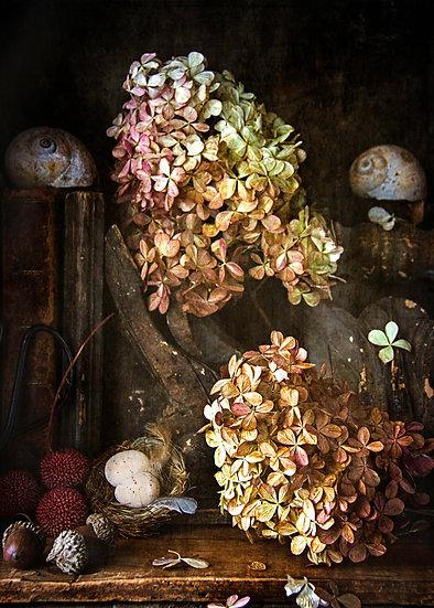 Hydrangea Still Life 2