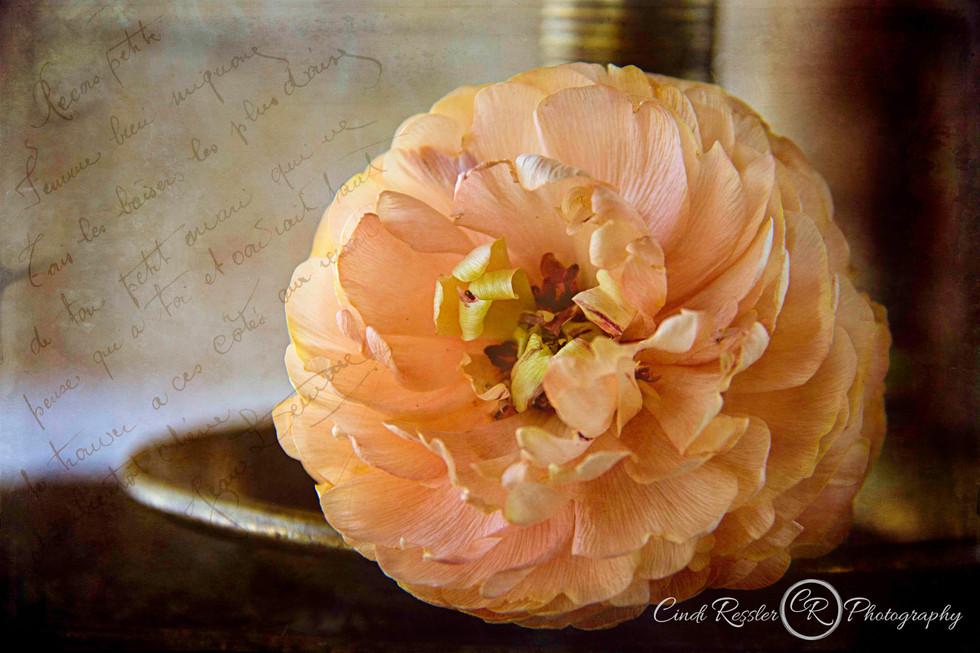 Ranunculus and Candlestick