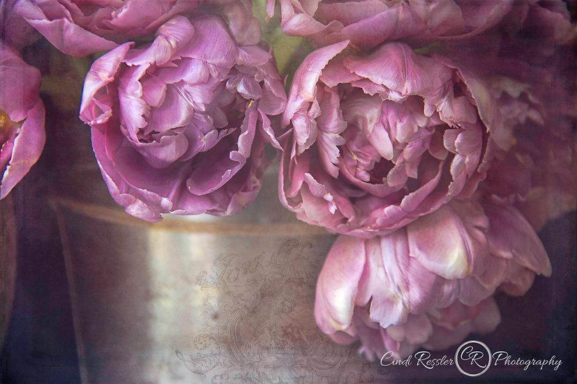 Double Bloom Tulips