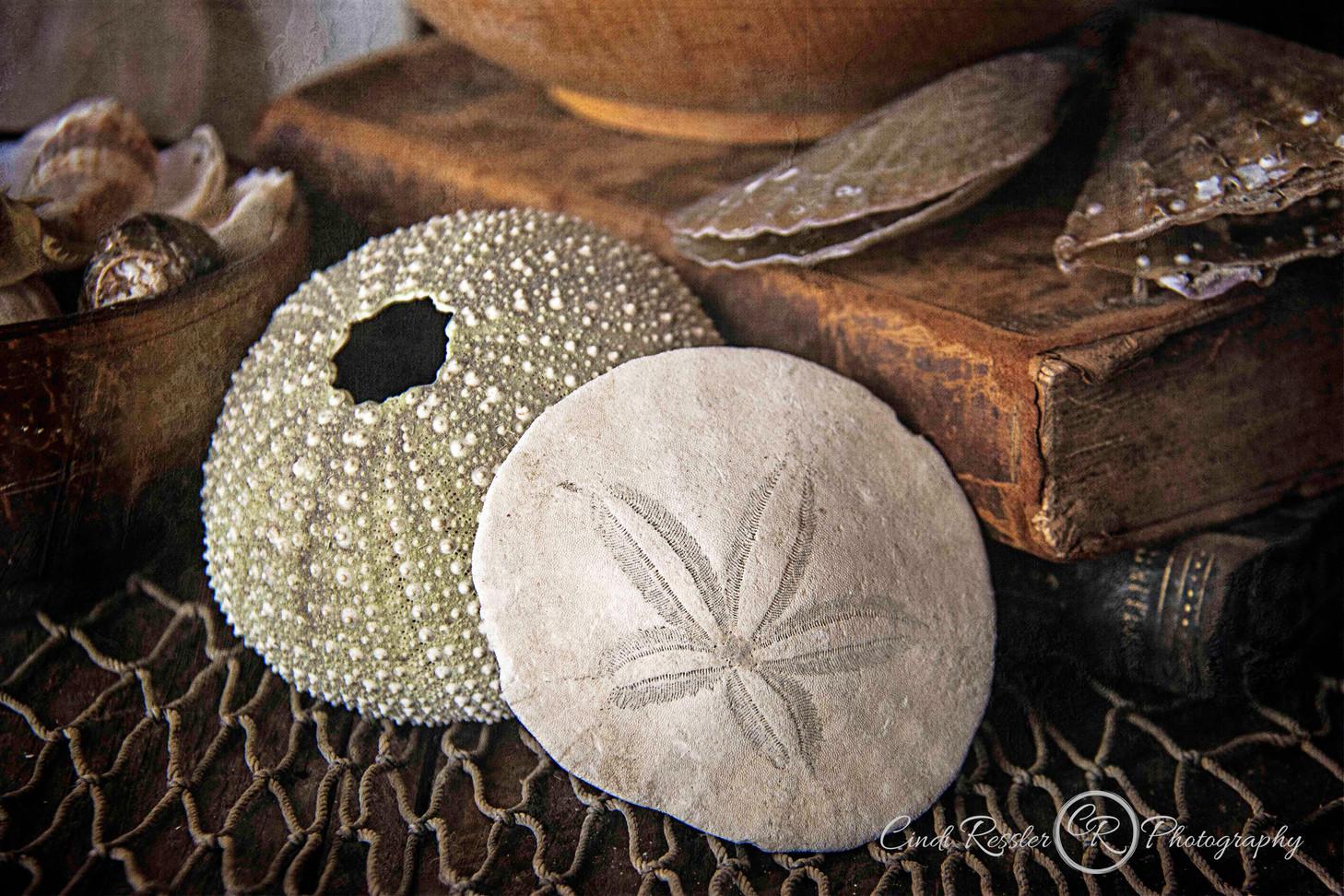 The Sea Urchin And Sand Dollar